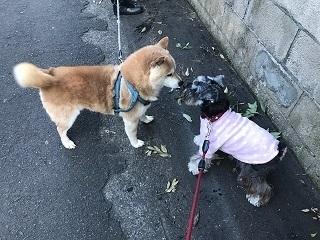 しば犬.jpg