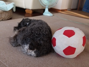 ボール2個.jpg