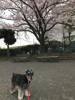 台五丁目公園.jpg