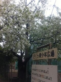 桜青少年広場.jpg