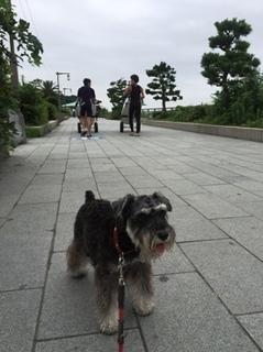 江の島への道.jpg