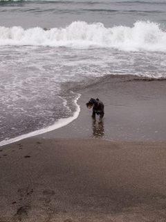 波の横.jpg