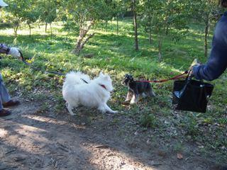 白い犬と.jpg